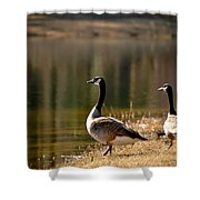 Canada Geese In Golden Sunlight Shower Curtain