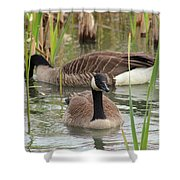 Canada Geese In Pond Shower Curtain