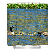 Canada Geese With 5 Goslings Shower Curtain