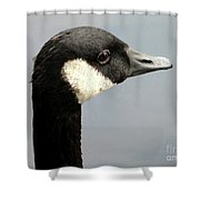 Canada Goose Close-up Shower Curtain