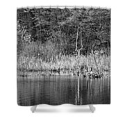 Canada Goose Couple Bw Shower Curtain