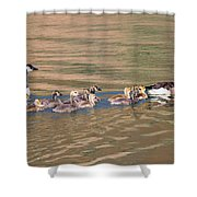 Canada Goose Family Shower Curtain