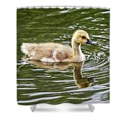 Canada Goose Gosling Shower Curtain