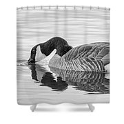 Canada Goose I Shower Curtain