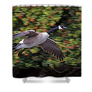 Canada Goose Landing Shower Curtain