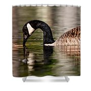 Canada Goose Reflections Shower Curtain