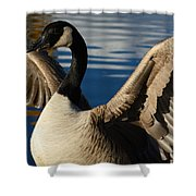 Canada Goose Spreading The Wings Shower Curtain
