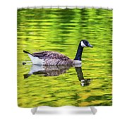 Canada Goose Swimming In A Pond Shower Curtain