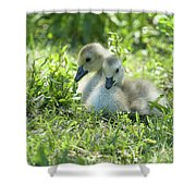 Canada Goslings Shower Curtain