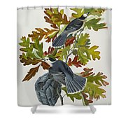 Canada Jay Shower Curtain by John James Audubon