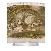 Canada Lynx Shower Curtain