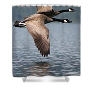 Canada's Goose Shower Curtain
