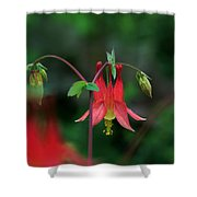 Canadian Columbine Shower Curtain