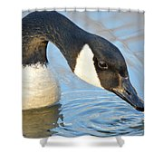 Canadian Drink Shower Curtain
