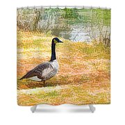 Canadian Geese 6 Shower Curtain