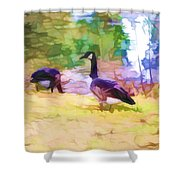 Canadian Geese In The Park 3 Shower Curtain
