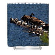 Canada Goose Family Line-up Shower Curtain