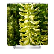 Canadian Milkvetch Wildflower Shower Curtain