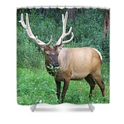 Canadian Rockies # 7 Shower Curtain