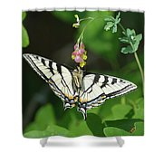 Canadian Tiger Swallowtail Butterfly-underside Shower Curtain