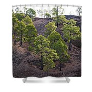 Canary Pines Nr 2 Shower Curtain