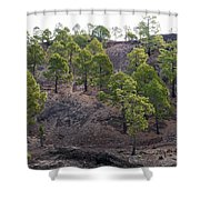 Canary Pines Nr 3 Shower Curtain