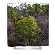 Canary Pines Nr 4 Shower Curtain