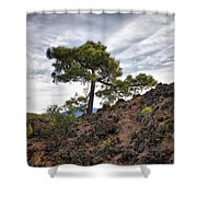 Canary Pines Nr1 Shower Curtain