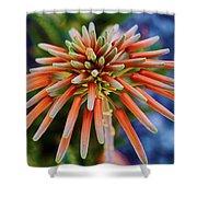 Candelobra Aloe In San Diego Shower Curtain