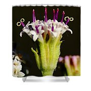 Candles On A Flower Cake Shower Curtain