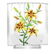 Candy Cane Lily Shower Curtain