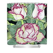 Candy Cane Roses Shower Curtain