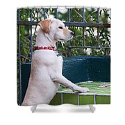 Canica 4 Shower Curtain