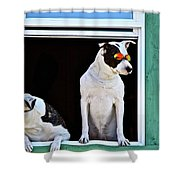 Canine Comedians Shower Curtain