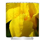 Canna At Sunrise Shower Curtain