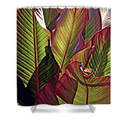 Canna Leaves 2   Shower Curtain