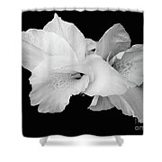 Canna Lily In Black And White Shower Curtain