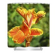 Canna Lily Shower Curtain by Kenneth Albin