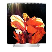 Canna Lily Shower Curtain by Will Borden