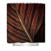 Canna Leaves Shower Curtain