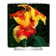Cannas With Dew Shower Curtain