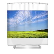 Canola Blue Shower Curtain