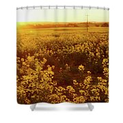 Canola Sunburst Shower Curtain