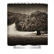 Canopy Shower Curtain