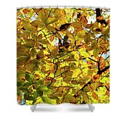 Canopy Of Autumn Leaves  Shower Curtain