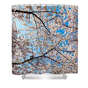 Canopy Of Cherry Blossoms Shower Curtain