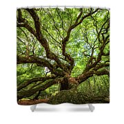 Canopy Of Color At Angel Oak Tree  Shower Curtain