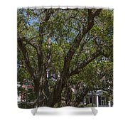 Can't See The House For The Tree's Shower Curtain