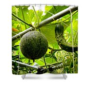 Cantaloupe And Hanging On Tree 1 Shower Curtain