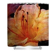 Cantaloupe Lily 3683 Idp_2 Shower Curtain